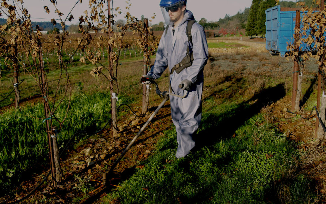Staying Safe During and After Wine Crush Season